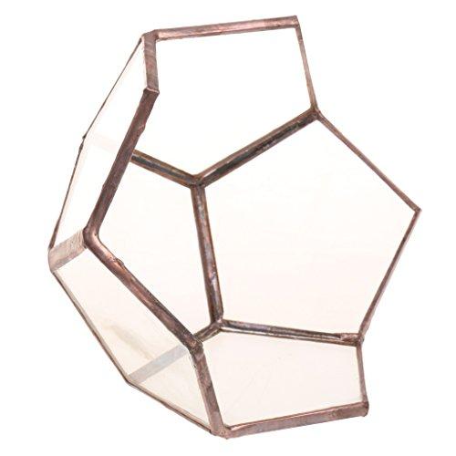 Baoblaze Pflanzen Halterung Klar Glas Geometrische Terrarium Container Lotus Box Desktop Übertopf für Moos Air Pflanzen Miniatur Outdoor Fairy Garden Deko Geschenk