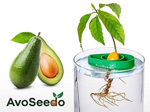 AvoSeedo das Besondere Garten Geschenk - Pflanzen Sie Ihren Eigenen Avocadobaum Kleine Geschenke für Frauen Mutter FreundinOder als Geburtstagsgeschenk für Männer Klein Dekoration
