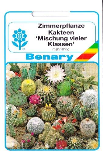 Kaktus Kakteen Mischung vieler Klassen Saatgut Sämereien ca 40 Samen
