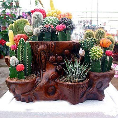 Verschiedenes Kaktus 100 Samen - Stachelig Sukkulenten Kakteen-Saatgut Set Zimmerpflanzen