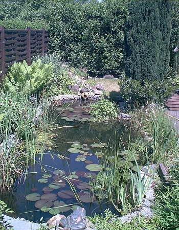 Über 20 Wasserpflanzen für den Gartenteich Teich