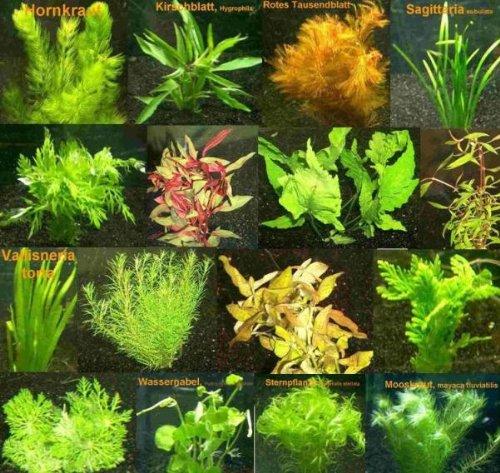 9 Bunde mit über 60 Aquarium-Pflanzen  Dünger - Farbiges Sortiment für 60-100 Liter Aquarien Wasserpflanzen für Alle Aquarienbereiche