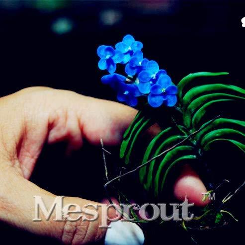Bloom Green Co Geben Sie Schiff Cattleya Hybrida Blumen Bonsai 100PCS berühmten Blumen Mini-Orchideen Bonsai Topfbüropflanze Schöne Blumen 2