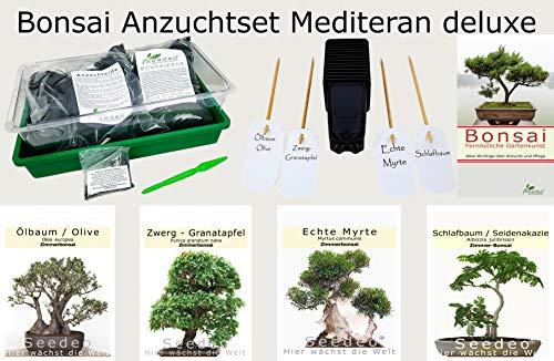 Seedeo Bonsai Anzuchtset Mediteran deluxe Echte Myrte Ölbaum Zwerg Granatapfel