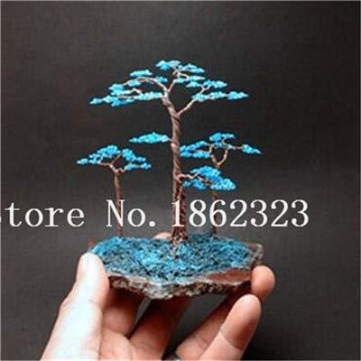 Bloom Green Co Bonsai 50 PC japanische Juniper Bonsai-Baum Starter Kriechender Wacholder Nana Topfpflanze für Heim amp Garten einfach zu wachsen 2