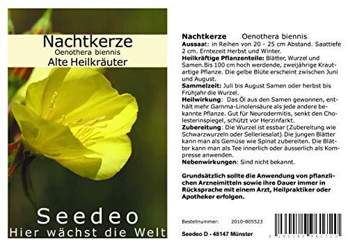 Seedeo Nachtkerze Oenothera biennis 100 Samen