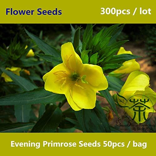 Shopmeeko ^^ Nachtkerze ^^^^ Zum Anpflanzen 300pcs Oenothera Biennis Suncups Flower ^^^^ beliebte Zierpflanzen von Sundrops ^^^^