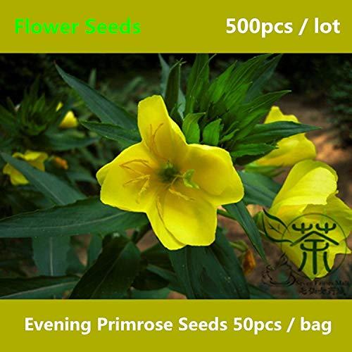 Shopmeeko ^^ Nachtkerze ^^^^ Zum Anpflanzen 500pcs Biennale Oenothera Biennis Flower ^^^^ krautige Blütenpflanzen Sundrops ^^^^
