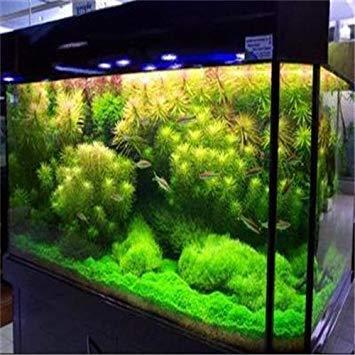 Gartenpflanze 500pcs  bag Wasserkorallengrassamen seltene Wasser Dekoration Aquarium Dekoration Bonsai Seed