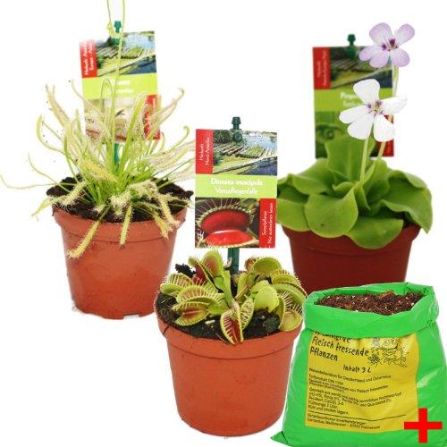 Starter Set Fleischfressende Pflanzen - 3 Pflanzen  Erde - Karnivorenerde