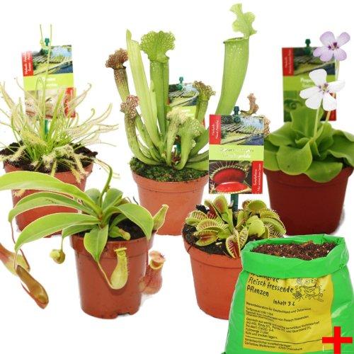 Starter Set Fleischfressende Pflanzen - 5 Pflanzen  Erde - Karnivorenerde