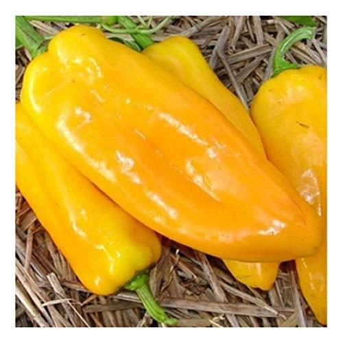 Eine alte süße Sorte aus Italien - Marconi gelb - 20 Samen